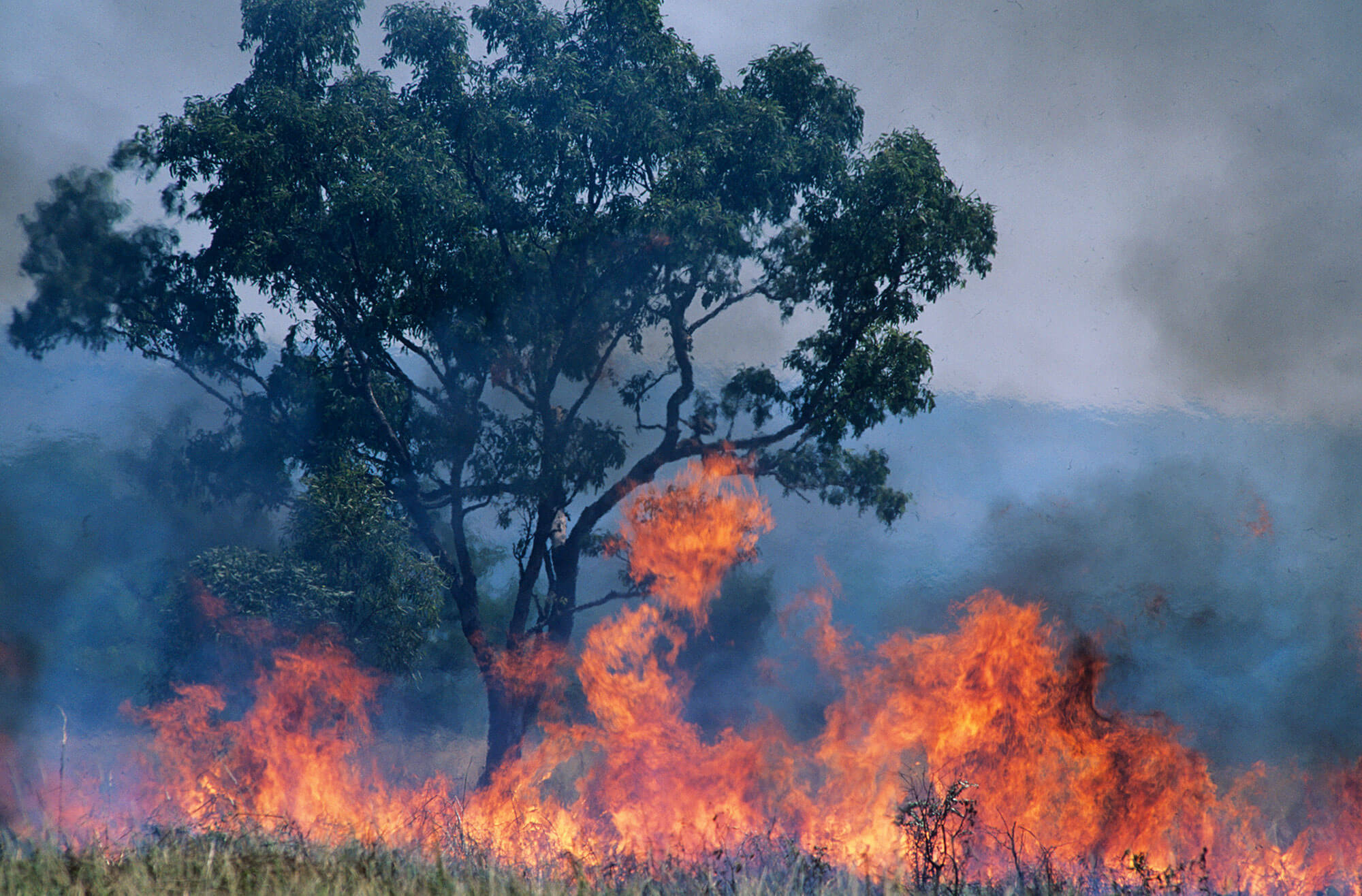 Planning for Bushfire Protection